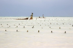 Ib_trebbien_seaweed_harvest_2